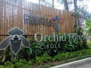 LaLaLa Fest Daya Tarik Baru Destinasi Digital Orchird Forest Cikole Bandung
