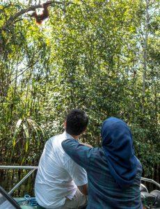 Belajar dari Cinta Orang Utan pada Tanjung Puting