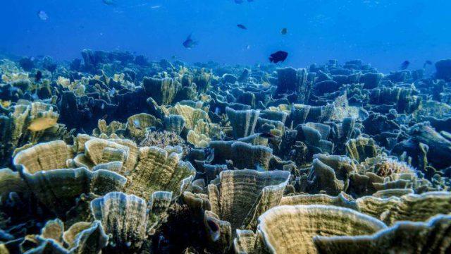 Kemenpar Gandeng Astra Internasional Kembangkan Homestay Desa Wisata di Pulau Pramuka