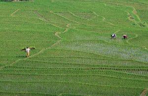 Dorong Peningkatan Sektor Pangan dan Pertanian untuk Kesejahteraan Masyarakat Indonesia