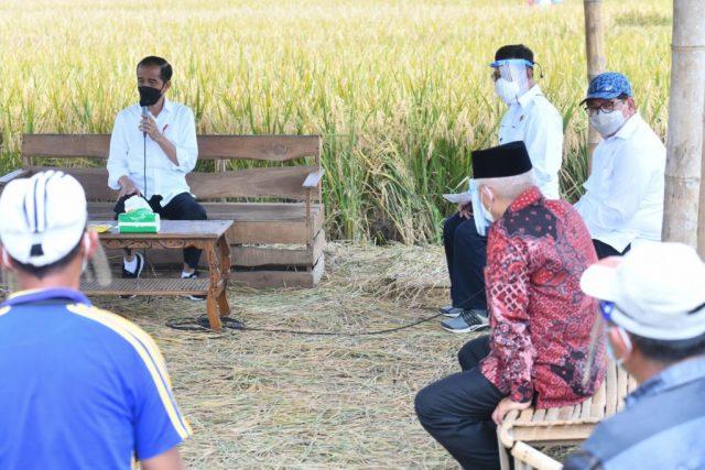 Presiden Tinjau Panen, Tanam, dan Penggilingan Padi di Kabupaten Malang
