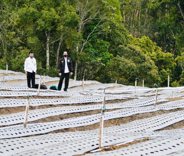 Presiden Kunjungi Lokasi Panen Padi di Indramayu dan Tinjau Kawasan Industri Terpadu Batang