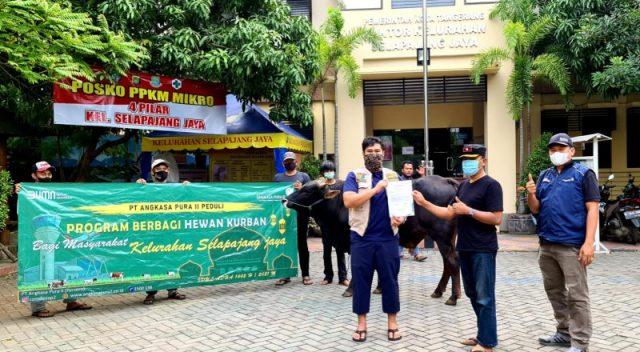 Idul Adha 1442 Hijriah, Bandara AP II Salurkan Hewan Kurban 40 Ekor Sapi